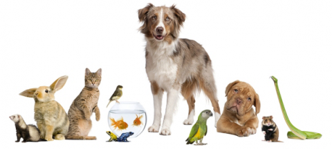bigstock_Group_Of_Pets_Together_In_Fron_8258872Resized_1.png
